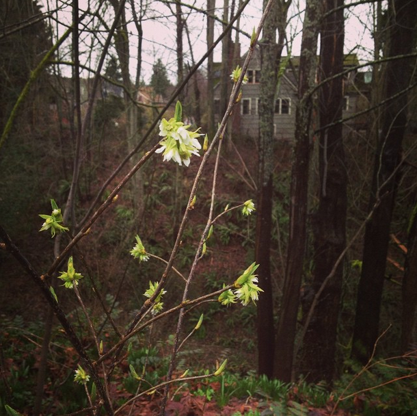 first forest blossoms