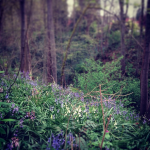 Signs of Emergence: What the Forest Teaches Me about Wisdom