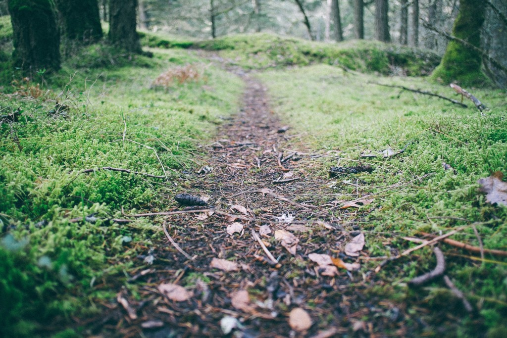 forest-moss-path-1058